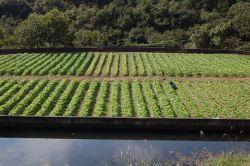 西本農園 畑2